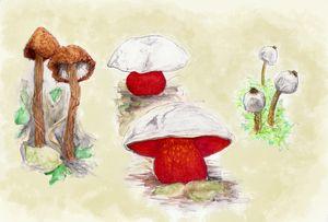 Endangered mushrooms - Maili J McQuaid