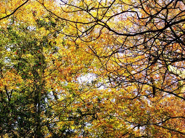 Autumn leave no.2 - Maili J McQuaid