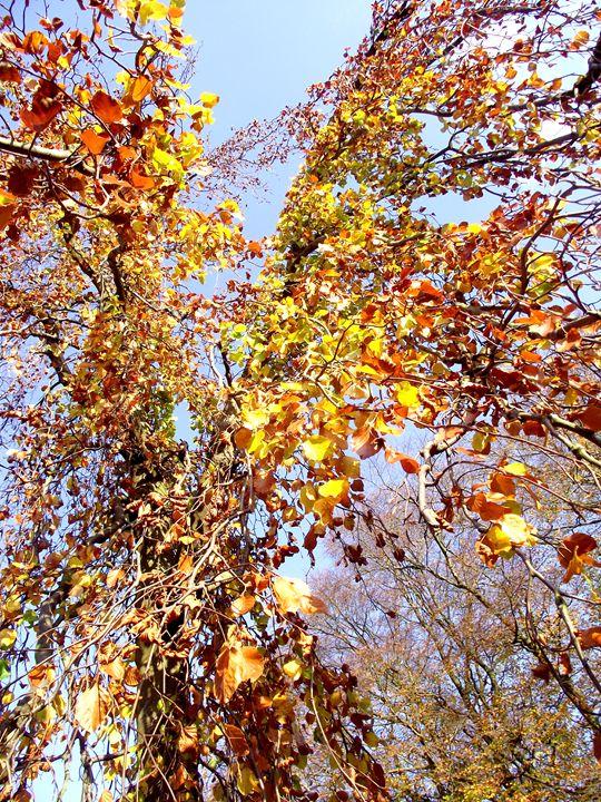 Golden cascade - Maili J McQuaid