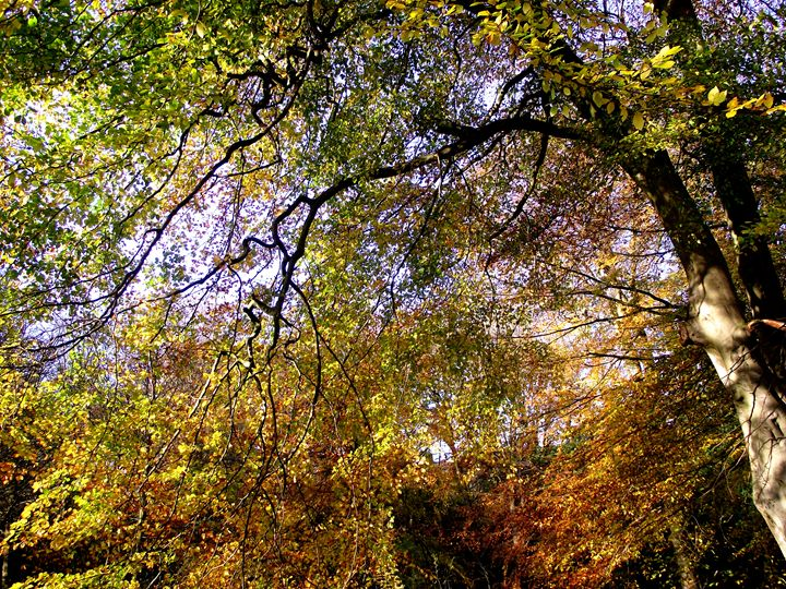 Autumn leaves no.1 - Maili J McQuaid