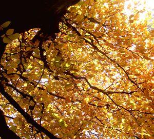 Golden light - Maili J McQuaid