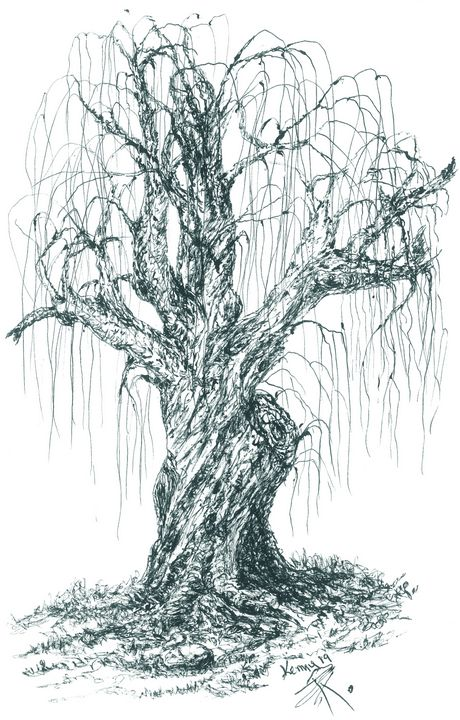 Old willow tree! - themontanascribbler