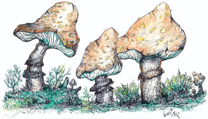 Mushrooms - themontanascribbler
