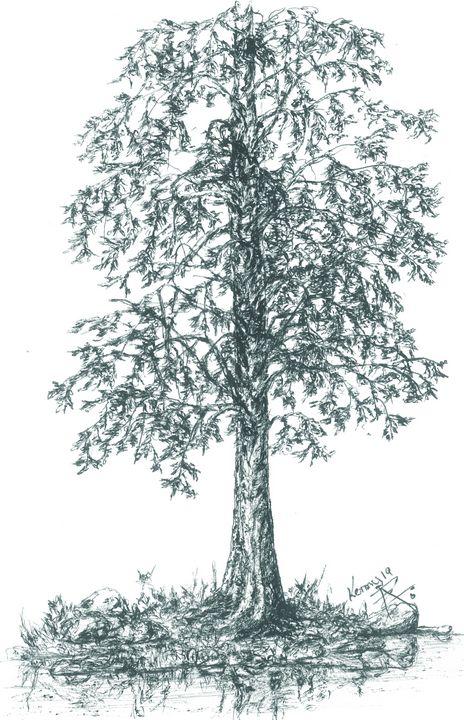 Shade pine tree on the pond! - themontanascribbler
