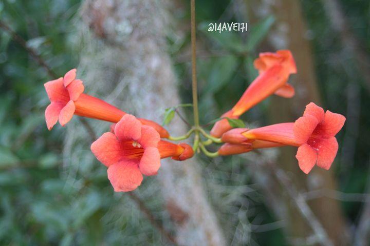 Beauty - Nature