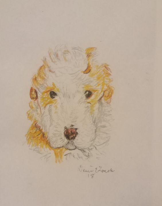 poodle color sketc - Dennis E. Loucks