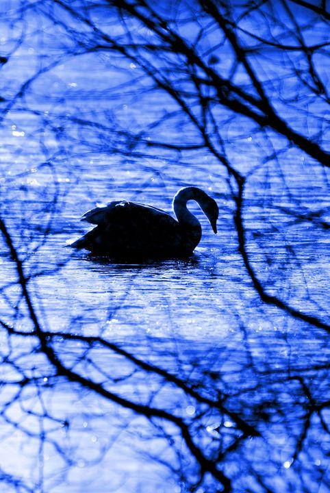 Swan Lake Blues - Brian Raggatt