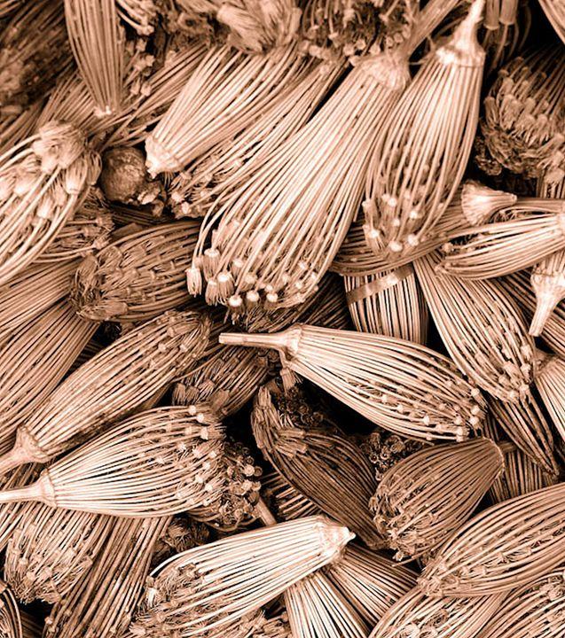 Dried herbs sepia - Brian Raggatt