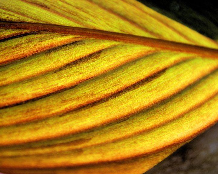 Leaf Abstract - Brian Raggatt