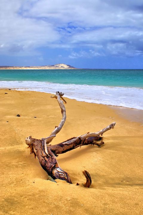 Island Beach Driftwood - Brian Raggatt