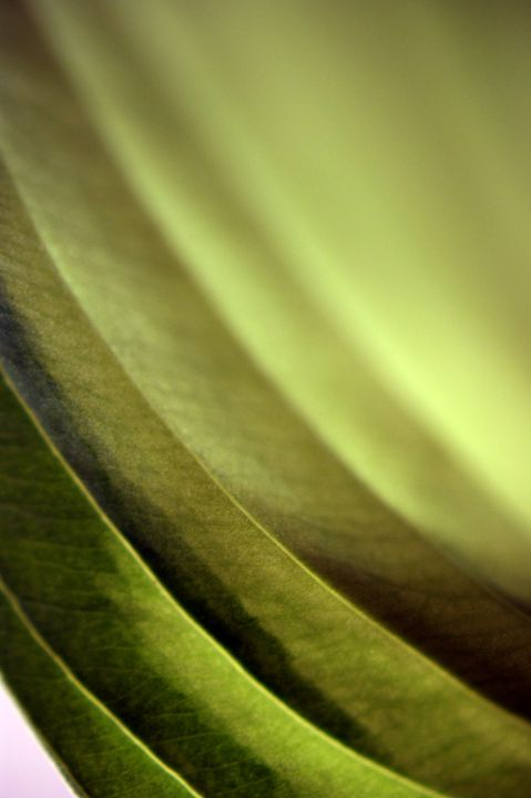 Abstract Leaf - Brian Raggatt
