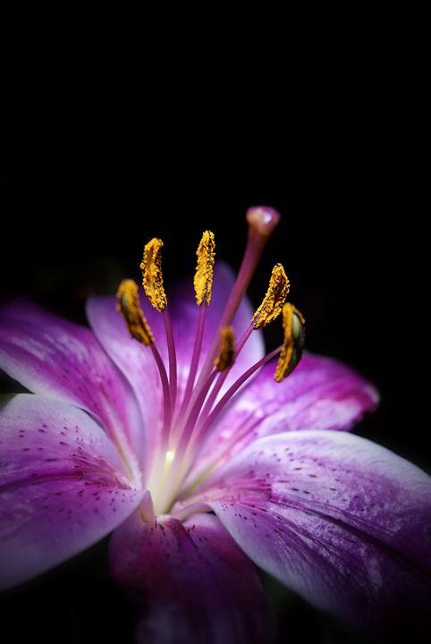 Beauty in the Night - Brian Raggatt