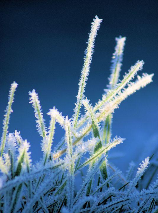Winter Grass - Brian Raggatt