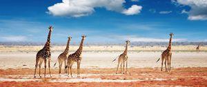 Etosha Travel