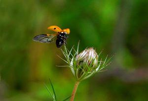 Ladybird Liftoff