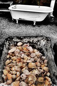 Sea Shell Sale