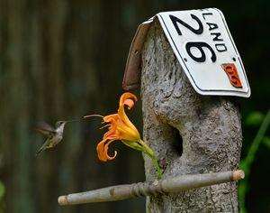 Hummingbird Berd and Breakfast