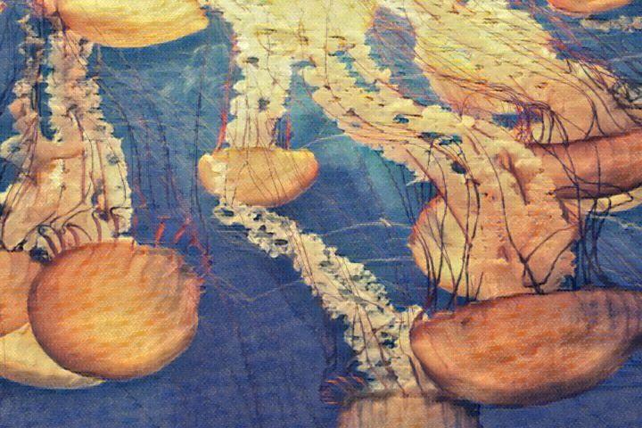 Upside Down Jellyfish - Defendus