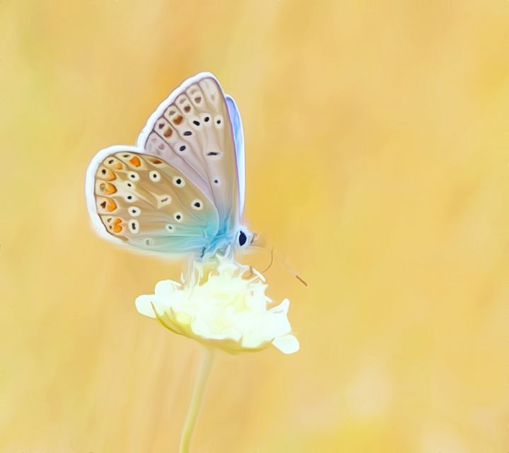 Butterfly on a Flower - Defendus