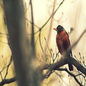 Robin in the Fall