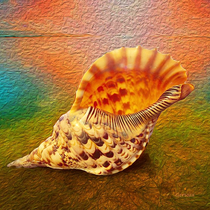 Shell - Gersoza