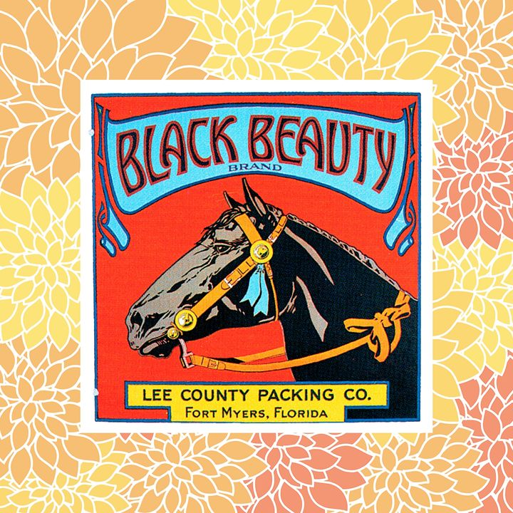 Black Beauty Horse Label - Gersoza