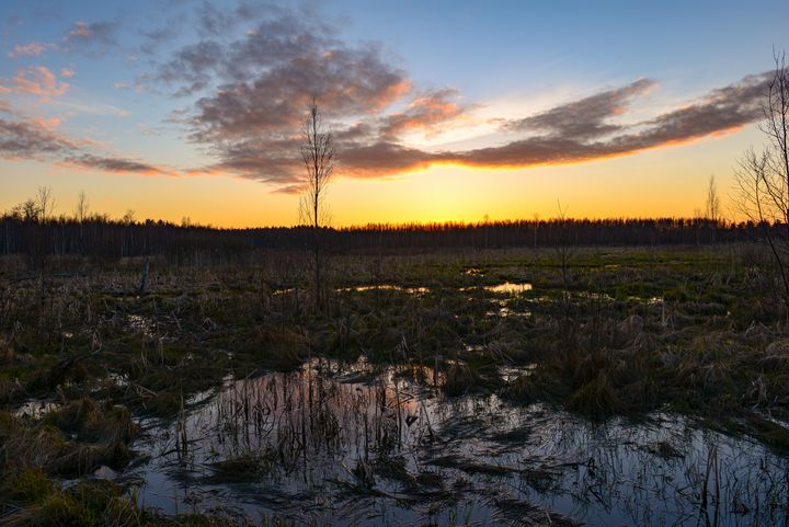 spring sky at sunset over a swamp - yarvin13