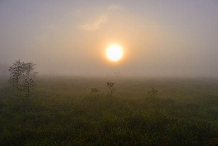 Solar circle in swamp fog - yarvin13