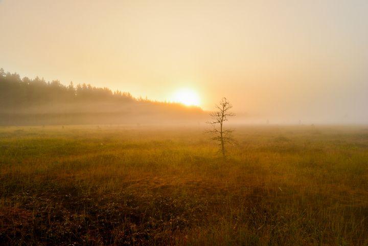 Sunrise in a misty swamp haze - yarvin13