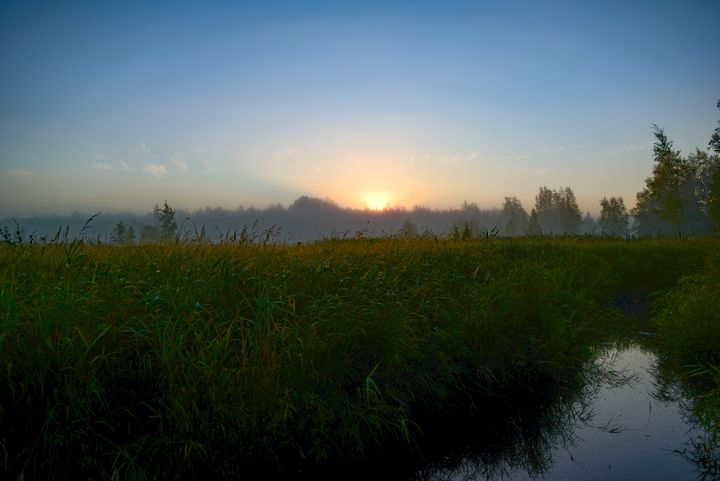 Sunrise Behind Forest Over Grassy - yarvin13