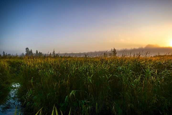 sky in the sunlight over a swamp - yarvin13
