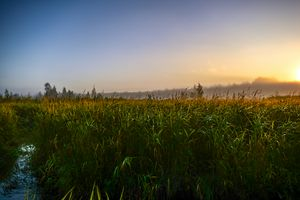 sky in the sunlight over a swamp