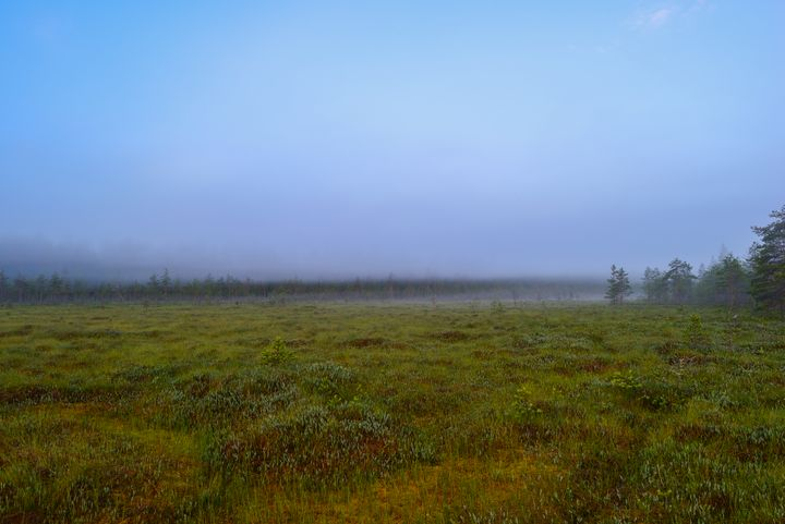 Morning fog on a forest swamp - yarvin13