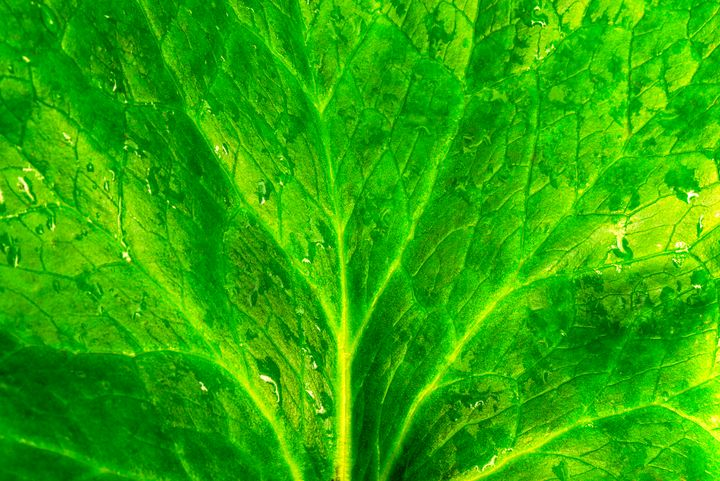 textured green leaf of water lily - yarvin13