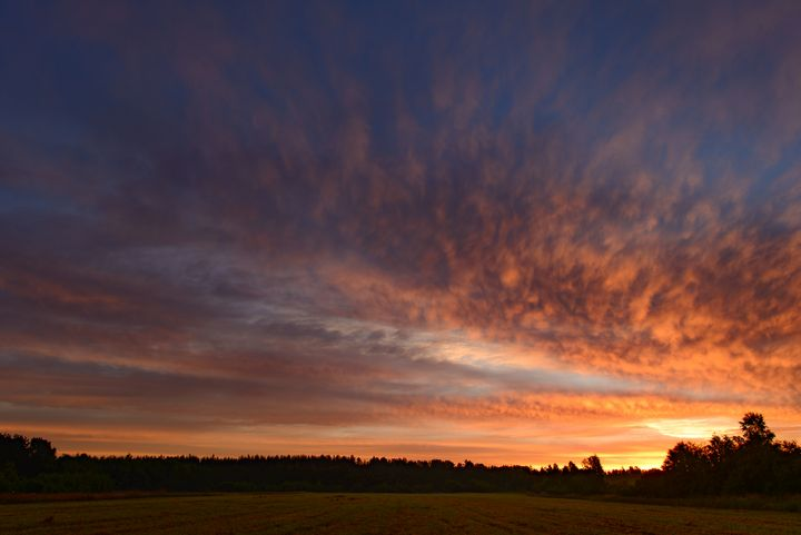 dawn sky over a green  field - yarvin13