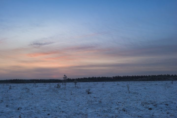 Morning sunlight  over a snowy swamp - yarvin13