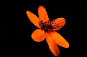 spring forest flower in the dark