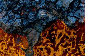 Colors texture of birch mushroom