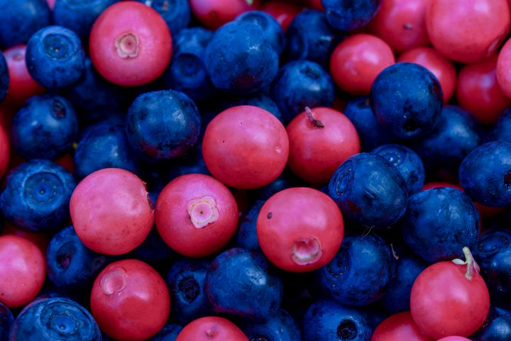 Forest Berries background - yarvin13