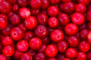 Lingonberry berry fresh forest fruit
