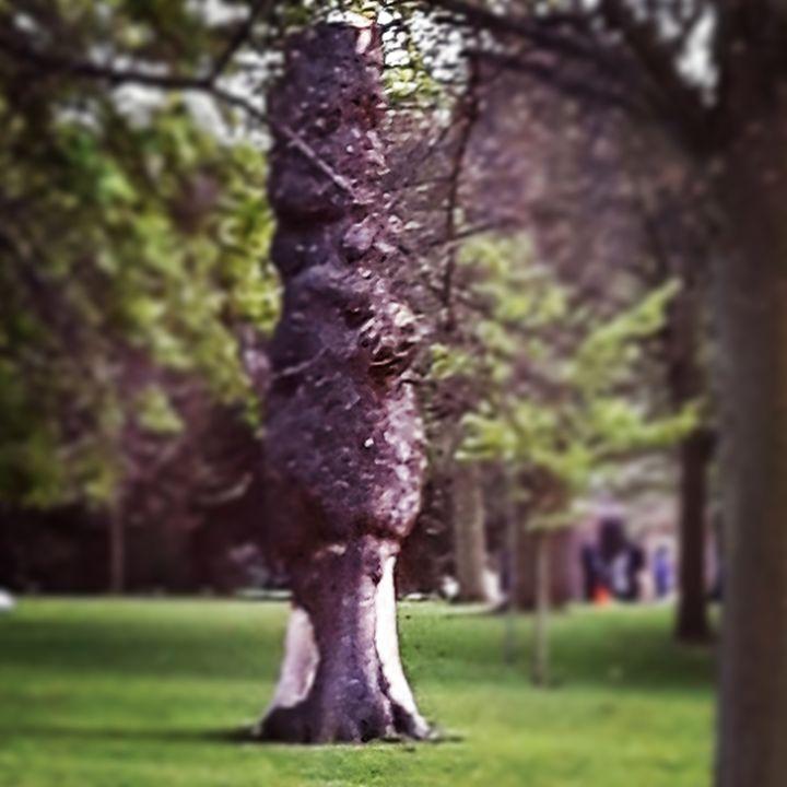 Treant tree - Argonel