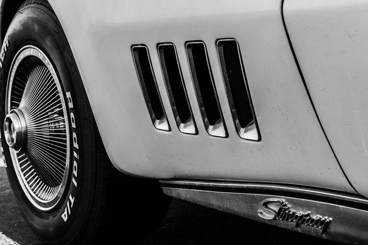 Stingray - TWT Photography