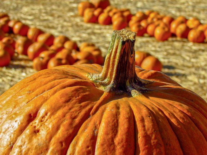 Pumpkin - TWT Photography