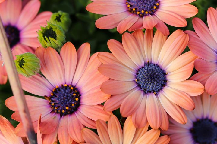 Daisy Afternoon - TWT Photography