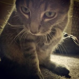 My Three Legged Cat (Gimpy)