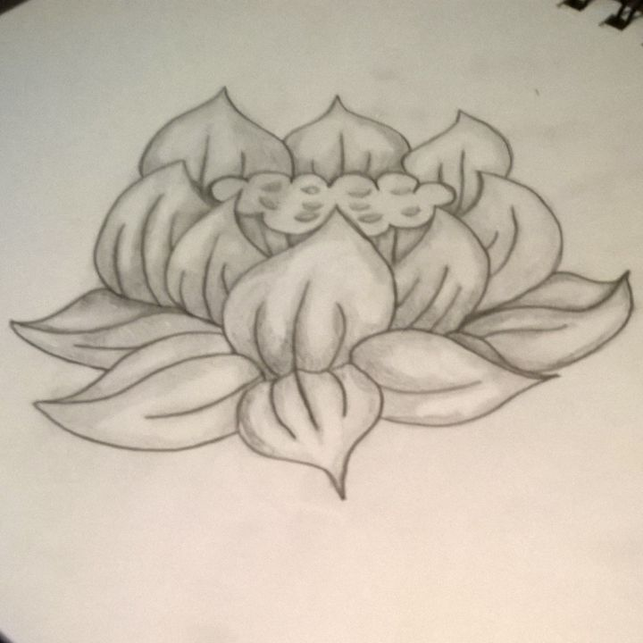 Flower Sketch - Alex Ao