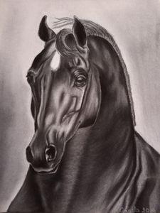 Arabian Horse charcoal art drawing