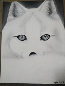 Artic snow fox charcoal art drawing