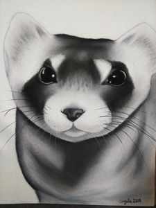 Black footed ferret charcoal art
