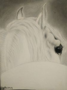 White horse charcoal art drawing